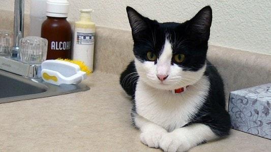 cat-vet-exam