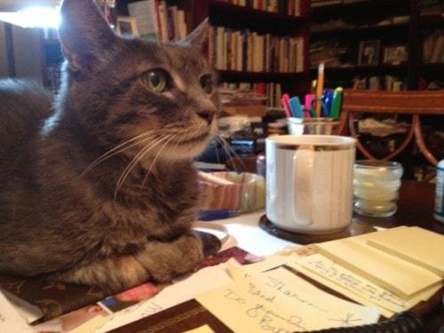 cat-on-desk