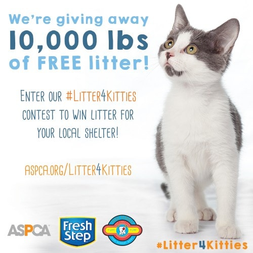 litter-for-shelter-cats