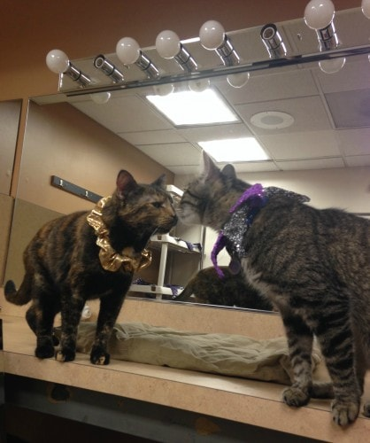 acro-cats-sookie-oz