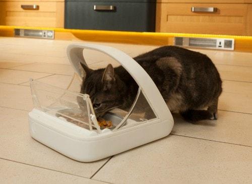 kitten ear cleaning