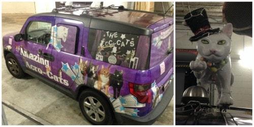 acro-cats-van