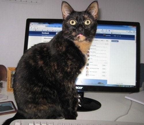 cat-computer
