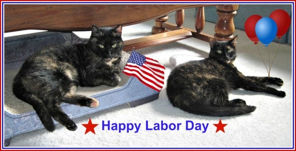 Image result for happy labor day images with cats