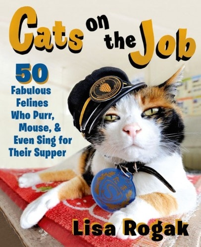 cats-on-the-job