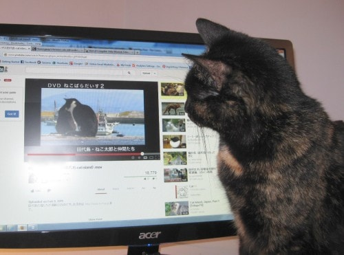 cat-watching-video