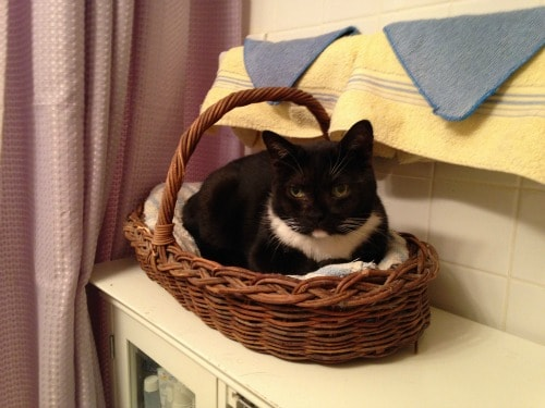 cat-in-basket