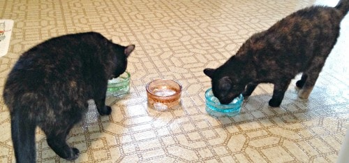 pawnosh-glass-bowls
