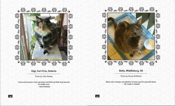 Tortitude interior pages