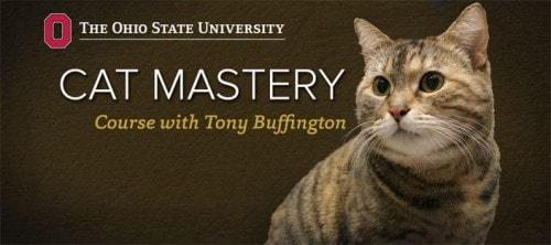 cat-mastery