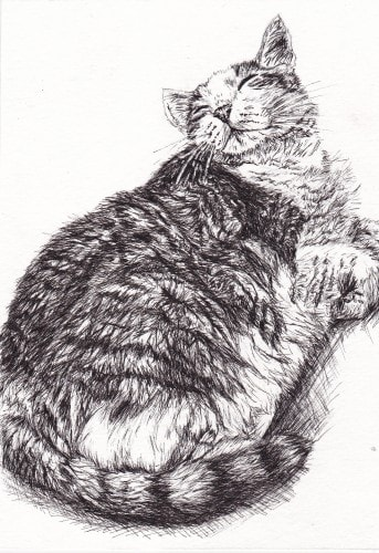custom-cat-drawing