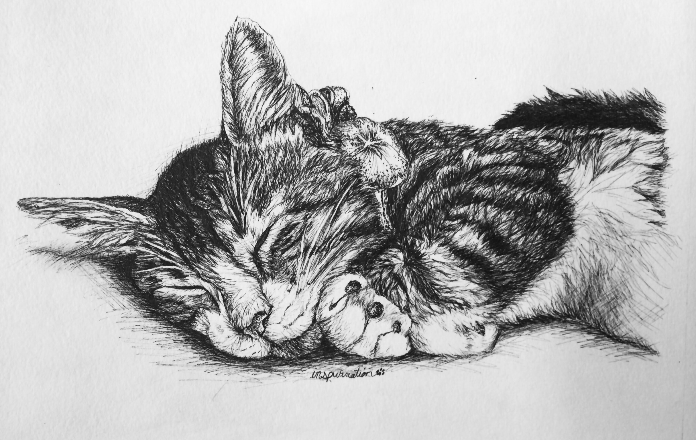 Janet England S Blog Custom Pen And Ink Cat Drawings By