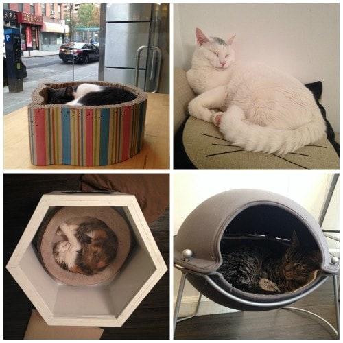 Meow-Parlour