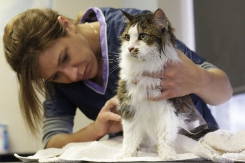 Different Strokes For Different Coats How To Care For Your Cats