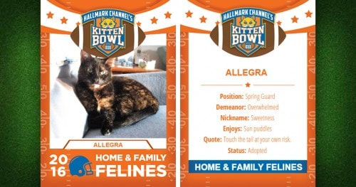Allegra-Kitten-Bowl