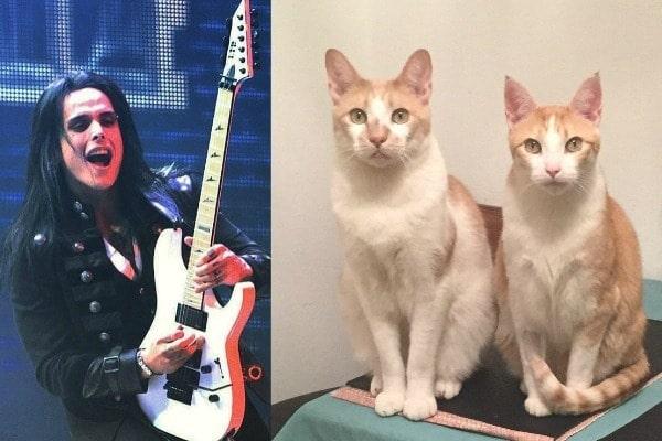 Bill-Hudson-cats-guitars