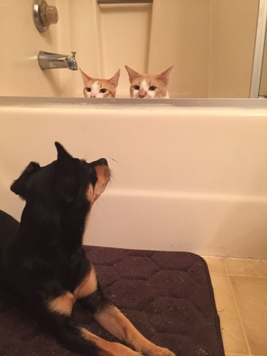 two-cats-and-a-dog