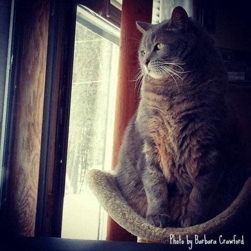 purrs-of-wisdom-enlightenment-feline-style