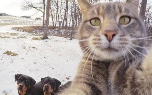 Manny-selfie-cat