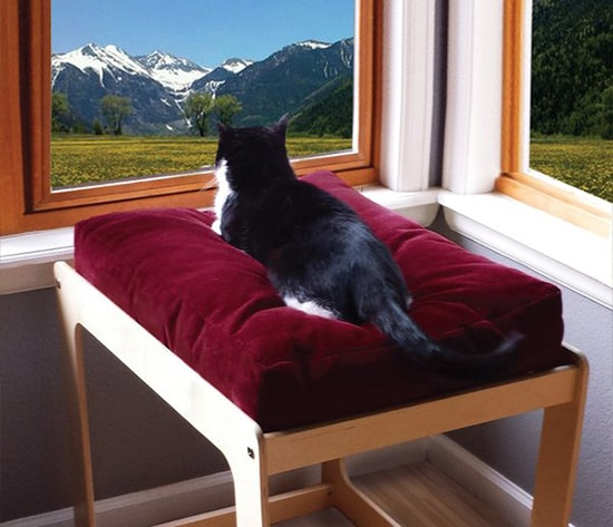 cat-window-seat