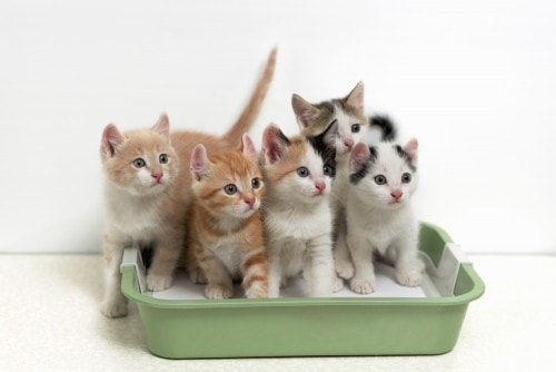 how often should you clean the litter box - Litter Boxes