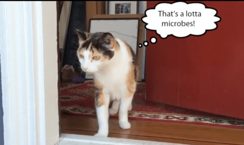Kittybiome Project Wants Your Catu0027s Poop