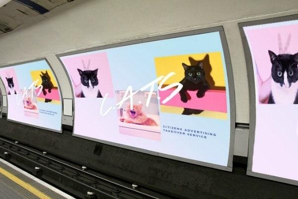 subway-cats