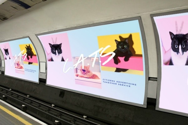 subway-cats