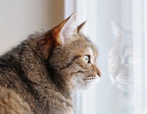 emergency-cat-care
