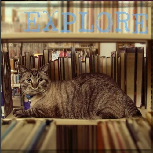 library-cat