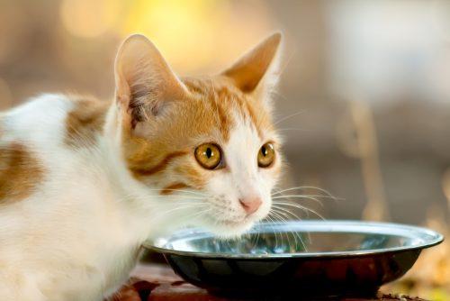 The Conscious Pet Best Cat Foods