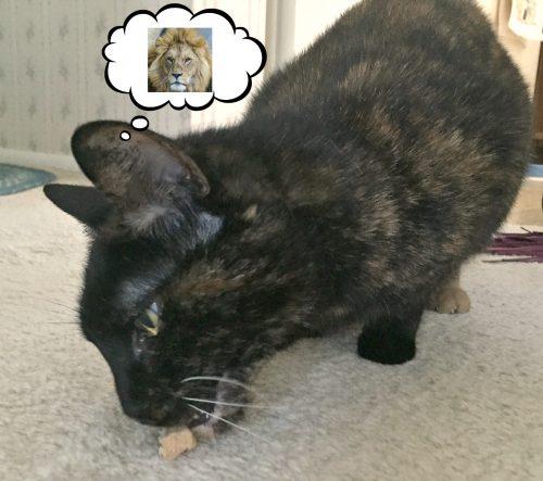 Big-cat-rescue-treats
