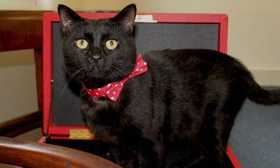 Gladstone-treasury-cat