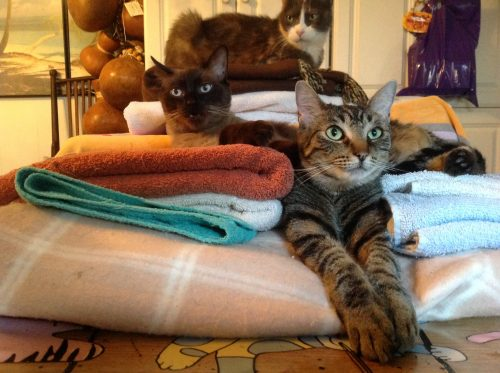 Patterson and Tweety (with Noodle in the background)