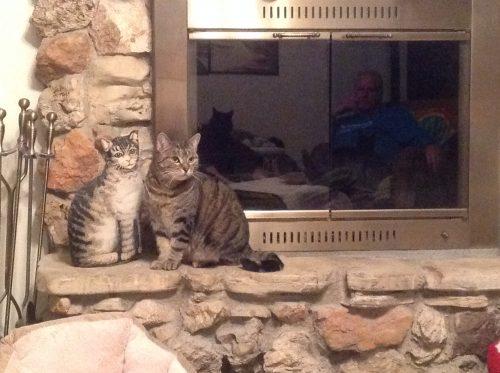 tabby-cat