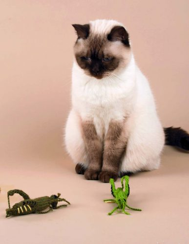 Knits_for_Kitties_Grasshopper