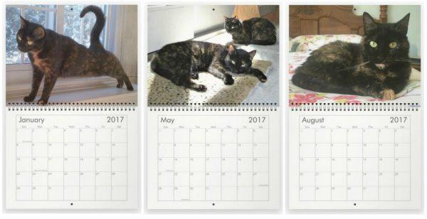 2017-cat-calendar