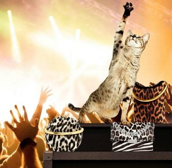 stella-mccartney-cat-fashion