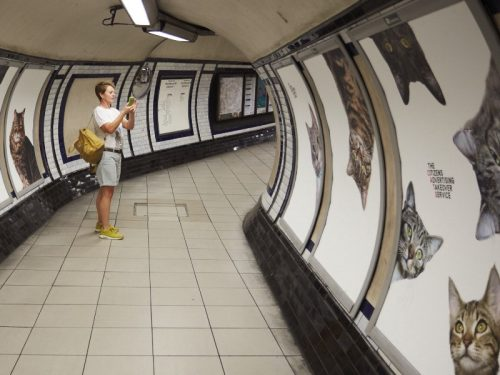 cats-london-tube