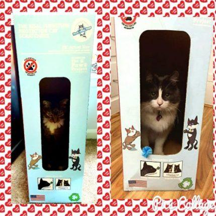 kool-kitty-toys