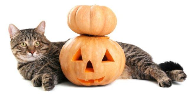 cat-pumpkin-halloween