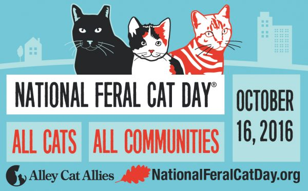 national-feral-cat-day-2016