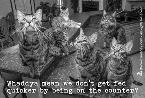 cats-on-counter