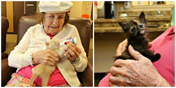 seniors-save-kittens