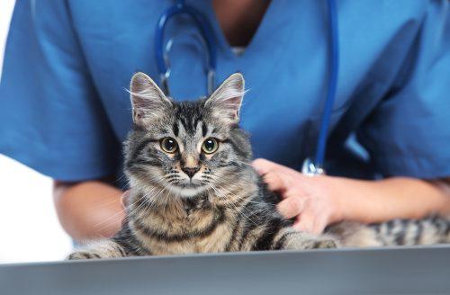 feline-health