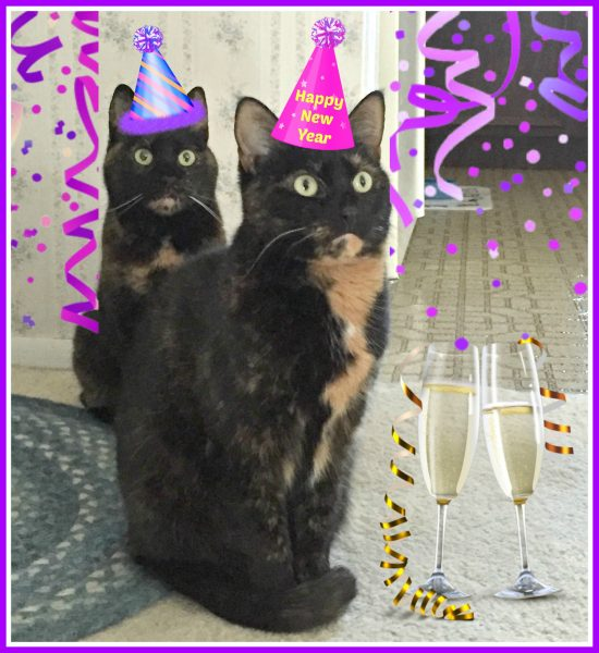 new-years-cats
