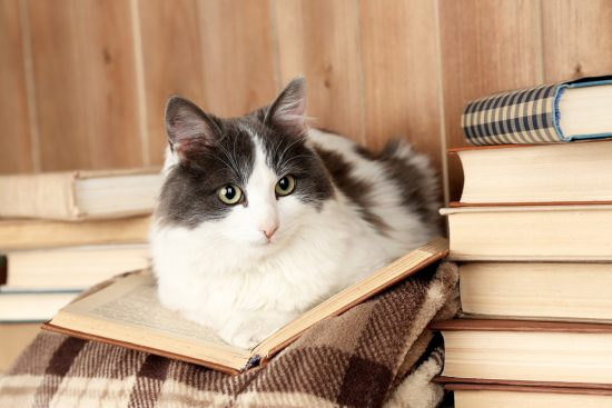 cat-books