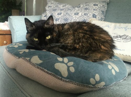 tortoiseshell-cat-pillow