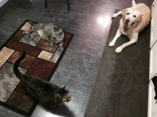 Jeff-Plate-cats-dog