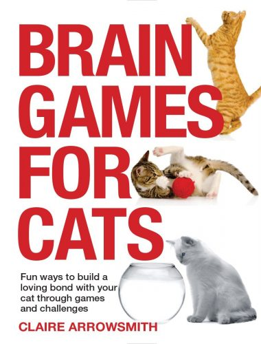 brain-games-for-cats